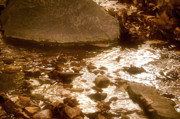 Water Reflections Originals - Sepia Sunlight by Michael Putnam