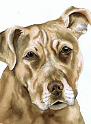 Watercolor Print Framed Prints - Sepia Tone Pit Bull Dog Framed Print by Cherilynn Wood