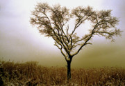 Storm Photographs Posters - Sepia Tree Poster by Skip Willits