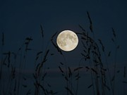 Hunters Moon Prints - September Moon Print by J J  Everson