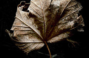 Autumn Leaf Photos - September by Odd Jeppesen