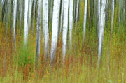 Abstract Impressionism Photo Prints - September Stroll Print by Bill Morgenstern
