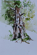 Sequoia Paintings - Sequoia Tree by Peg Ott Mcguckin