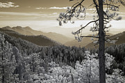 Sequoia National Park Prints - Sequoia View Print by Mike Irwin