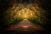 Autumn. Fall Colors - Serene Archway by Anthony Rego