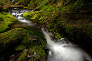 Moss Green Prints - Serene Creek Print by Mike Reid