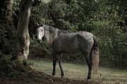 Forelock Photos - Serene Forest D9667 by Wes and Dotty Weber