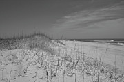 Seacape Prints - Serene Lookout Print by Betsy A Cutler East Coast Barrier Islands