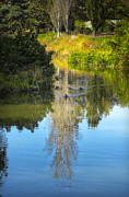 Pond In Park Posters - Serene Reflection Poster by Julie Palencia