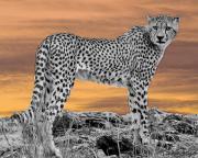Serengeti Cheetah Print by Larry Linton
