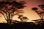 John Wolf - Serengeti Sunset