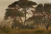 Elephants Digital Art Originals - Serengeti Wanderers by Joseph G Holland