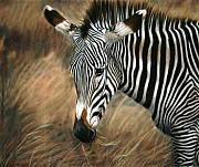 Children Pastels Framed Prints - Serengeti Zebra Framed Print by Carol McCarty