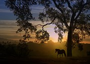 Paso Fino Prints - Serenity at Sunrise Print by Stephanie Laird