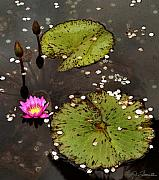 Water Lillies Prints - Serenity Print by Joe Bonita