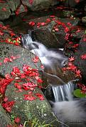 Red Leaves Photo Originals - Serenity by Winston Rockwell