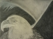Kylani Arrington Prints - Serious Eagle Print by Kylani Arrington
