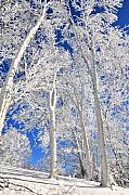 Rime Photo Framed Prints - Serious Rime Frost Framed Print by Alan Lenk