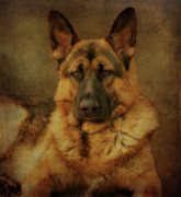 Dogs Digital Art Metal Prints - Serious Metal Print by Sandy Keeton