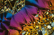 Polarized Prints - Serotonin Print by Michael W. Davidson
