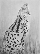 Serval Art - Serval by Heather Ward