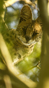 Serval Art - Serval in tree by Alistair Lyne