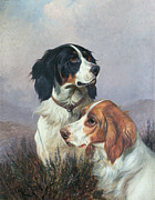 Doggies Paintings - Setters on a Moor by Colin Graeme