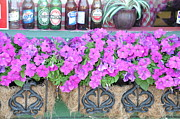 Floral Still Life Prints - Seven Bottles Of Beer On The Wall Print by Jan Amiss Photography