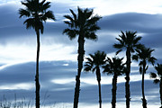 Sun Photographs Photos - Seven Palms by Gilbert Artiaga