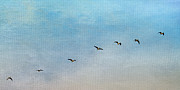 Flying Geese Framed Prints - Seven Framed Print by Rebecca Cozart