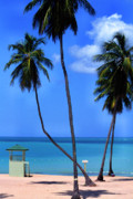 Seven Seas Beach Puerto Rico Print by Thomas R Fletcher