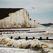 Flying Bird Posters - Seven Sisters Chalk Cliffs Poster by Peter Funnell
