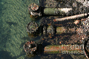 Sewage Art - Sewage Pipes In Boston Harbor by Ted Kinsman