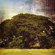 Fantasy Tree Art Prints - Shade Tree Print by Skip Nall