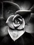 Shawna Gibson - Shades of Gray II