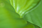 Leaf Detail Framed Prints - Shades of Green Framed Print by Heiko Koehrer-Wagner