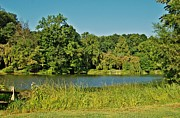 Pond Framed Prints Framed Prints - Shades Of Green - Holmdel Park Framed Print by Angie McKenzie