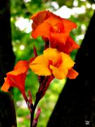 Rich Colorful Flower Prints - Shades Of Orange Print by Debra     Vatalaro