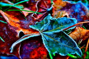 Fallen Leaf Photos - Shades of Washington by Gwyn Newcombe