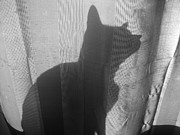 LDPhotography Stephanie Armstrong - Shadow Cat