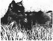 AE Hansen - Shadow Cat Portrait
