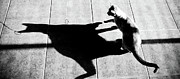 Cat Pictures Posters - Shadow Cat Poster by Scott Sawyer
