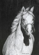 Western Pencil Drawing Prints - Shadow Print by David Ackerson