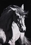 White Horses Pastels Framed Prints - Shadow Horse Framed Print by Jan Fontecchio