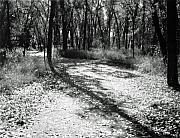 Allan Mcconnell Metal Prints - Shadow Path Metal Print by Allan McConnell