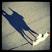 Abstract Photos - #shadow #puppy #dog #abstract by Mandy Shupp