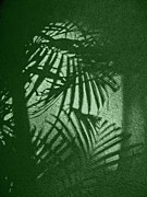 Palm Trees Fronds Originals - Shadow by Yogesh More