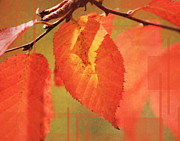 Red Leaf Pyrography Posters - Shadowed Orange/Red Leaf Poster by Andrew Sliwinski