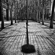 New York Winter Framed Prints - Shadows on the ground Framed Print by John Farnan