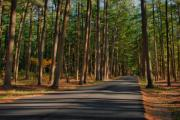 Landscapes - Shadows Road - Ocean County Park by Angie McKenzie